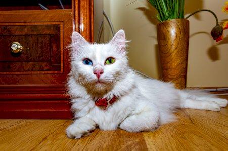 Cat Sophie